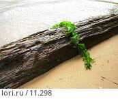 Купить «Водоросль, зацепившаяся за бревно», фото № 11298, снято 11 июня 2006 г. (c) Екатерина / Фотобанк Лори