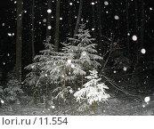 Купить «Елки в снегу», фото № 11554, снято 20 ноября 2005 г. (c) Комиссарова Ольга / Фотобанк Лори