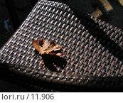 Купить «Осень на стуле», фото № 11906, снято 24 сентября 2006 г. (c) Юрий Синицын / Фотобанк Лори