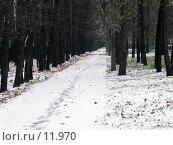 Купить «Первый снег», фото № 11970, снято 22 октября 2006 г. (c) Рыжов Андрей / Фотобанк Лори