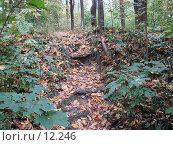 Купить «Ступеньки в лес», фото № 12246, снято 28 сентября 2006 г. (c) Roki / Фотобанк Лори