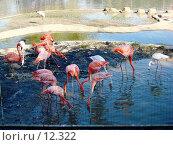 Купить «Фламинго», фото № 12322, снято 24 сентября 2006 г. (c) Roki / Фотобанк Лори