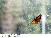 Купить «Бабочка на поцарапанном стекле», фото № 12474, снято 8 сентября 2006 г. (c) Лисовская Наталья / Фотобанк Лори