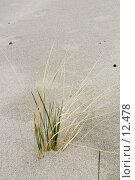 Купить «Трава в песке на пляже Балтийского моря», фото № 12478, снято 2 мая 2006 г. (c) Лисовская Наталья / Фотобанк Лори