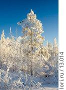 Купить «Зимний пейзаж, деревья под снегом  после снежного бурана», фото № 13014, снято 5 ноября 2006 г. (c) Ольга Красавина / Фотобанк Лори
