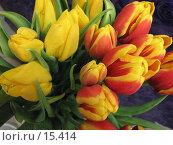 Купить «Букет тюльпанов», фото № 15414, снято 19 декабря 2006 г. (c) Комиссарова Ольга / Фотобанк Лори