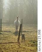 Купить «Лошадь и собака, наблюдающие за прохожим», фото № 21998, снято 1 февраля 2006 г. (c) Михаил Лавренов / Фотобанк Лори