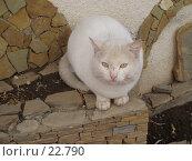 Купить «Дикая кошка», фото № 22790, снято 2 февраля 2006 г. (c) Golden_Tulip / Фотобанк Лори