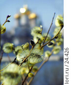 Купить «Верба на фоне золотых куполов церкви», фото № 24426, снято 31 марта 2005 г. (c) Julia Nelson / Фотобанк Лори