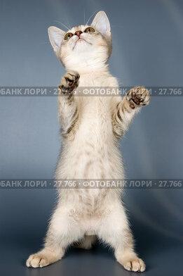 Купить «Котёнок в студии», фото № 27766, снято 7 февраля 2007 г. (c) Vladimir Suponev / Фотобанк Лори