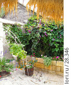 Купить «Двор», фото № 28346, снято 25 сентября 2005 г. (c) Светлана / Фотобанк Лори