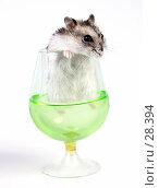 Купить «Джунгарский хомячок выглядывает из бокала с зеленой жидкостью», фото № 28394, снято 18 марта 2007 г. (c) Сергей Лешков / Фотобанк Лори