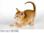Купить «Котёнок в студии», фото № 29042, снято 31 марта 2007 г. (c) Vladimir Suponev / Фотобанк Лори