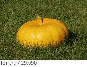 Купить «Тыква на газоне», фото № 29090, снято 23 сентября 2006 г. (c) Андрей Ерофеев / Фотобанк Лори