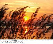 Тростниковый закат. Стоковое фото, фотограф DIA / Фотобанк Лори