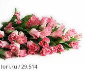 Купить «Большой букет розовых тюльпанов, лежащих на белом фоне», фото № 29514, снято 8 марта 2007 г. (c) Ольга Хорькова / Фотобанк Лори
