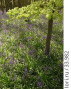 Купить «Дикие гиацинты», фото № 33982, снято 18 апреля 2007 г. (c) Tamara Kulikova / Фотобанк Лори