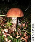 Купить «Подосиновик», фото № 34086, снято 12 августа 2006 г. (c) Кардаков Алексей Игоревич / Фотобанк Лори