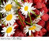Купить «Красное и белое», фото № 35902, снято 25 июля 2006 г. (c) Ирина Солошенко / Фотобанк Лори