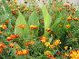 Цветы города Почепа, фото № 36542, снято 24 августа 2017 г. (c) Элеонора Лукина (GenuineLera) / Фотобанк Лори