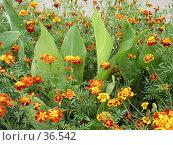 Купить «Цветы города Почепа», фото № 36542, снято 18 января 2019 г. (c) Элеонора Лукина (GenuineLera) / Фотобанк Лори