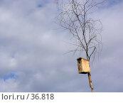 Купить «Небесный скворечник», фото № 36818, снято 10 июля 2005 г. (c) Андрей Яшин / Фотобанк Лори