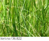 Купить «Травянистый фон», фото № 36822, снято 10 июля 2005 г. (c) Андрей Яшин / Фотобанк Лори