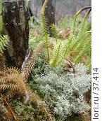 Купить «Несколько видов мха», фото № 37414, снято 28 мая 2006 г. (c) Маря / Фотобанк Лори