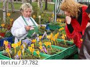 Купить «Продажа саженцев на выставке садоводов (редакционное)», фото № 37782, снято 26 апреля 2007 г. (c) Vladimir Fedoroff / Фотобанк Лори