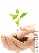 Купить «Человеческая рука и молодой побег растения», фото № 38046, снято 2 мая 2007 г. (c) Андрей Армягов / Фотобанк Лори
