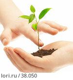Купить «Человеческая рука и молодой побег растения», фото № 38050, снято 2 мая 2007 г. (c) Андрей Армягов / Фотобанк Лори