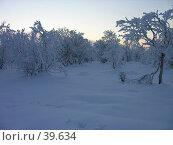 Купить «Березы на фоне зимнего заката», фото № 39634, снято 2 ноября 2006 г. (c) Виталий Матонин / Фотобанк Лори