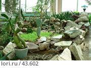 Купить «Альпинарий с кактусами», фото № 43602, снято 4 апреля 2007 г. (c) Вера Тропынина / Фотобанк Лори