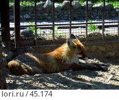Купить «Лиса», фото № 45174, снято 20 мая 2006 г. (c) Илья Садовский / Фотобанк Лори