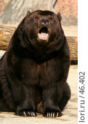 Купить «Бурый медведь», фото № 46402, снято 31 марта 2007 г. (c) Морозова Татьяна / Фотобанк Лори