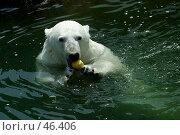 Купить «Белый медведь», фото № 46406, снято 9 июля 2005 г. (c) Морозова Татьяна / Фотобанк Лори