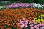 Цветочный ковер, фото № 47478, снято 22 мая 2007 г. (c) Удодов Алексей / Фотобанк Лори