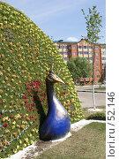 Купить «Дмитров. Клумба в виде павлина», фото № 52146, снято 12 июня 2007 г. (c) Julia Nelson / Фотобанк Лори