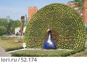 Купить «Дмитров. Клумба в виде павлина», фото № 52174, снято 12 июня 2007 г. (c) Julia Nelson / Фотобанк Лори