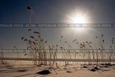 Купить «Мороз и солнце на берегу реки Вуокса», фото № 53786, снято 18 августа 2018 г. (c) Сергей Александров / Фотобанк Лори