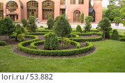 Купить «Декоративные кустарники перед офисным зданием», фото № 53882, снято 25 мая 2007 г. (c) Вячеслав Потапов / Фотобанк Лори
