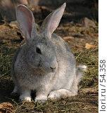 Кролик. Стоковое фото, фотограф Борис Никитин / Фотобанк Лори