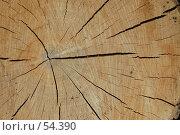 Срез дерева. Стоковое фото, фотограф Борис Никитин / Фотобанк Лори
