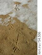 Купить «Следы птицы на снегу и песке», фото № 54506, снято 19 ноября 2018 г. (c) Елена Мельникова / Фотобанк Лори