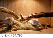 Купить «Террариум», фото № 54790, снято 10 сентября 2005 г. (c) Елена Руденко / Фотобанк Лори