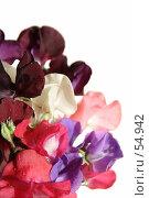Купить «Мокрый букет душистого горошка», фото № 54942, снято 23 июня 2007 г. (c) Tamara Kulikova / Фотобанк Лори