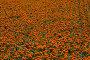 Цветочный фон, фото № 56022, снято 13 июля 2006 г. (c) Argument / Фотобанк Лори