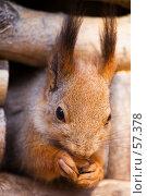 Купить «Белка», фото № 57378, снято 28 марта 2007 г. (c) Argument / Фотобанк Лори