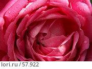 Купить «Розовые лепестки», фото № 57922, снято 1 июля 2007 г. (c) Смирнова Лидия / Фотобанк Лори