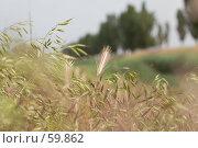 Купить «Колосок на поле», фото № 59862, снято 28 мая 2007 г. (c) Алексей Судариков / Фотобанк Лори